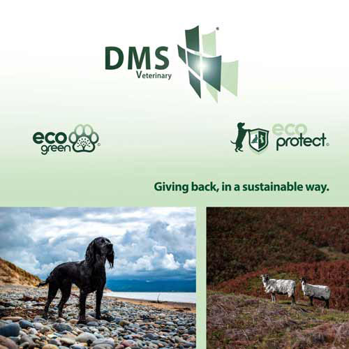 dms sustainability brochure